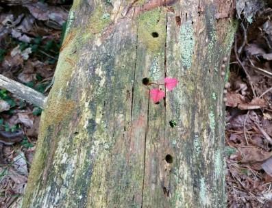 woodpecker holes (2).jpg